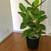 観葉植物返品