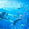 レゴランドに続き、名古屋に新たな水族館が2018年に開業。