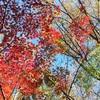 秋のつれづれもしくは冬