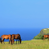 夢リスト116・沖縄の与那国島でヨナグニウマに会う
