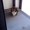 三毛猫「三色丼」 朝の「おはよー」