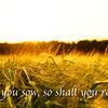 【英語でことわざ】As you sow, so shall you reap.