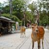 【旅行記】北九州から東京まで1,500kmの旅⑤ 奈良公園から浜松へ。そして帰京。