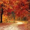 秋晴れ 日常雑記