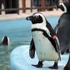 国語辞典上の「ペンギン」はみなそっくりだが…