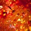 秋の題材(約50秒で読める)