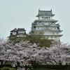 桜の写真2017。