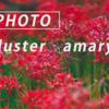 色鮮やかな彼岸花たち:Sony α7 III + SEL135F18GM