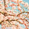 向山雄治の暖かい季節の到来!梅の名所をご紹介!☆彡
