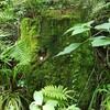 栃木県鹿沼研修で学んだ、木のこと、山のこと・・・