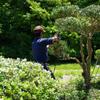 田舎ライフを快適にするために家周りの庭木剪定とゴミ片付け