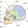 顎関節の構造の問題で顎関節症が発症しやすい