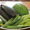 飛騨の夏野菜!
