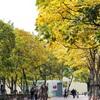撮影会のついでに上海植物園に行って撮影。