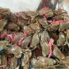 翌日(9日)朝早くから Crab Market (魚市場)に行きました。
