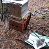 #105 雨の養蜂活動(2021/03/21)