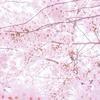 【2019年】東京の桜 お花見の穴場や名所。とっておきのスポット9選