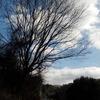 """ブラタモリ「呉~""""戦艦大和のふるさと""""呉はどうできた?~」のロケ地、見事な階段とそこから見える風景へ①"""