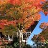 京都西山「善峯寺」紅葉 2020