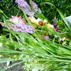 盆花とお墓参り