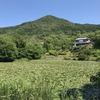 「マダム倶楽部」活動報告 池には未だ睡蓮の花が咲いている♪ 6月1日
