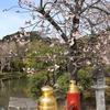 【鎌倉いいね】神社仏閣のSNS情報を賢く利用する。