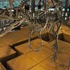 福井県立恐竜博物館に行ってきた 北陸遠征#1