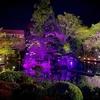 吉池旅館の庭園池(神奈川県箱根)