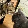 猫の鼻腔内リンパ腫⑧  縄張り争い