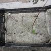 やっと自然薯の芽が出たので植え付けの準備をします