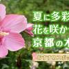 夏に多彩な花を咲かせる、京都の木槿(ムクゲ)おすすめスポット5選