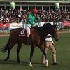 2017 東京スポーツ杯2歳ステークス 感想戦