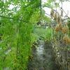 日曜日の雨畑‥
