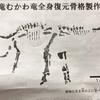 北海道から発掘された「むかわ竜」がすごい