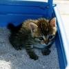 ◆猫の日限定◆猫と猫の飼い主のための猫セミナーを開催します。