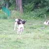 健気な牛と副鼻腔炎