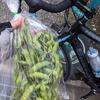 多摩湖サイクリングの帰り道 清瀬市 採れたて野菜販売の枝豆と新座塩ラーメンの名店 ぜんや
