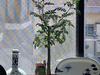 山椒の苗木が届きました。