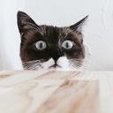 好奇心は猫をも殺す