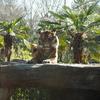 宮城旅行記 八木山動物園