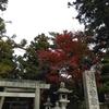 近所の紅葉🍁🍁🍁