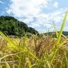 稲を楽しむ会【募集】