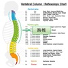 胸椎の構造