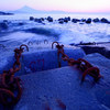 【写真一発!】三保の海岸で迎える朝