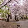 お花見の聖地、飛鳥山公園は広くは無いけど魅力の詰まった場所です