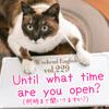 【週末英語#229】英語でお店が何時まで開いてるかを尋ねるときは「Until what time 〜?」