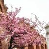 春が来た〜!!!