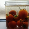 おいしいトマトを見極める実験(密度)