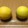 初めてのレモン収穫!|室内で鉢植えレモン『アレンユーレカレモン』栽培