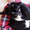 今日の黒猫モモ&白黒猫ナナの動画ー647